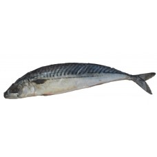 Salt Mackerel with Head
